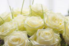 44/365 Happy White Valentine's (Marika's World) Tags: light roses 365 day44 valentinesday windowlight whiteroses xxxxxxxx bemyflickrvalentine whitevalentinesday