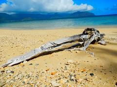 (Jay HTP) Tags: beach hawaii bay kaneohe driftwood