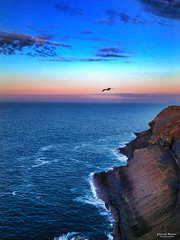 Flying high (Yavanna Warman {off}) Tags: ocean sunset sea sky panorama españa bird water clouds landscape faro atardecer mar flying spain agua rocks waves view sundown seagull horizon north cellphone paisaje cliffs cielo nubes mobilephone vistas olas gaviota santander acantilado rocas móvil cantabria horizonte norte pájaro waterscape iphone océano volar cabomayor yavannawarman iphone4s