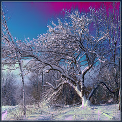 The Snow Tree (Tim Noonan) Tags: blue winter light sky white snow colour tree texture clouds digital photoshop shadows branches shining mosca hypothetical tistheseason vividimagination greenscene shockofthenew trolled stickybeak newreality sharingart maxfudge awardtree thecubeexcellencygallery davincimemories maxfudgeawardandexcellencegroup daarklands richardstopgallery magicunicornverybest magicunicornmasterpiece trollieexcellence magiktroll daarklandsexcellence exoticimage finestgold digitalartscene finestplatinum netartii vividnationexcellencegroup crmedelacrmelev2