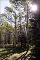 Sunlight-thru-trees (greenthumb_38) Tags: canada reunion rockies canadian alberta 2012 canadianrockies jeffreybass august2012 moseankoreunion