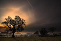 Patches Of Morning Light (Natasha Bridges) Tags: morning trees mist sunrise dawn shropshire wrekin