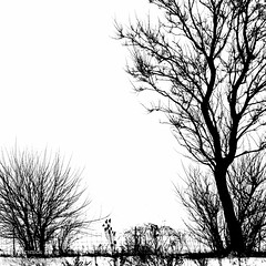 Silhouette (PJ Resnick) Tags: trees winter light shadow sky blackandwhite bw white snow plant black tree nature monochrome silhouette clouds contrast digital canon fence dark blackwhite illinois pond moody atmosphere monochromatic il highkey atmospheric chicagoland resnick dekalbcounty canonef1740mmf4l 5dmarkii canon5dmarkii eos5dmarkll pjresnick pjresnick pjresnickgmailcom perryjresnick pjresnick