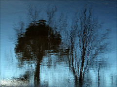 BLUE SILHOUETTE (Sheba53) Tags: blue trees abstract nature water silhouette pond bluewater silhouettes bluesky ripples waterreflection waterreflections pondreflection waterripples abstractreflection pondreflections johnstonri abstractreflections abstractwaterreflection johnstonwarmemorialpark