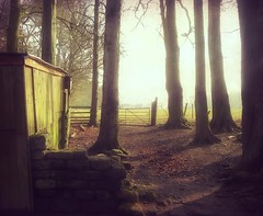 On the Edge of Woodland (vesna1962) Tags: trees winter england sunlight woodland scenery gate leeds hut goldenacrepark westyorkshire theworldwelivein creativephotocafe