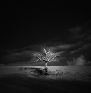 ѱ one, two, tree  XXI