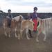 horse riding in Crete