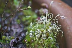 DSC_0674 (dan-morris) Tags: wood sunset white black tree green wet field grass forest photo leaf moss spring nikon shoot berries bokeh bark dew 1855mm dslr depth vr damp f3556g 1855mmf3556gvr d3100