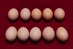 March 27, 2013 (solteronita) Tags: red ova marriageequality chickeneggs equalsign equalitysign