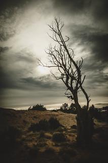~Navajo Night Sky~