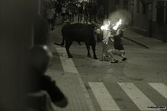 toro embolado (Olga Morales Psicloga) Tags: bull toros fiestas almenara bous carrer