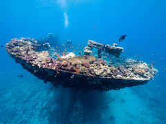 Stern of The Kingston (altsaint) Tags: 714mm egypt gf1 kingston panasonic redsea shagrock fish underwater wreck