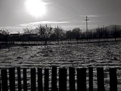 Paltinoasa  -  Jud. Suceava  -   Romania (amos.locati) Tags: paltinoasa judetul suceava bucovina romania winter inverno iarna zapada snow neige steccato recinto europe amos locati field campo black white alb negru blanc noir blanco y negro