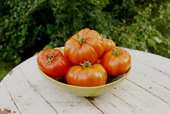 Tomato Harvest (obsequies) Tags: harvest september garden homegrown canada manitoba food organic growityourself country rural fruit vegetable tomatoes tomato heirloom yum yummy red rustic cottage summer fall autumn bokeh love