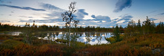 panorama of north lake (czdistagon.com) Tags: panorama landscape forest tundra borealforest lake sunset sky clouds trees north distagont2821 lee explore