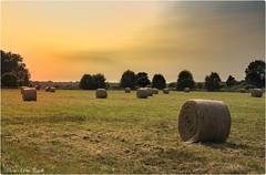 Borgfelder Wmmewiesen (Elanor82) Tags: canon eos 5d markiii 5dmk3 germany deutschland bremen hansestadt borgfeld borgfelder wuemmewiesen natura nature priroda erba grass trava cielo sky nebo tramonto sunset zalazak sunca hay fieno bale
