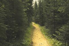 Sentiero nel bosco (Douglas M.P.) Tags: altoadige montagna mountain pini alberi natura natur selvaggio sentiero camminare walk italy