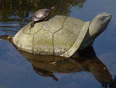 All aboard ! (Ben Zabulis) Tags:       japan asia nagasaki kyushu fareast turtle stoneturtle stoneornament gardenornament pond garden water glovergarden nature terrapin redearedterrapin 5photosaday reflection