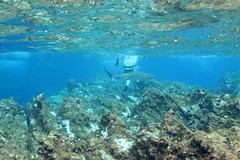 Raoul Island snorkelling (cathm2) Tags: newzealand kermadecs raoul island travel snorkelling underwater blue nature rock shark