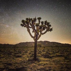 joshua tree (danielhuiting) Tags: joshua tree california night long exposure desert stars milky way