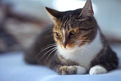 LIlly1 (haltdieklappe) Tags: haltdieklappe cat dancer berlin symmetrie canon eos 5dmark2 summer