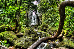 The Waterfall through the Trees (nate_s91) Tags: oahu hawaii waterfall water nature day trees detail holiday travel wanderlust usa america island slowshutter hdr serene peace peaceful