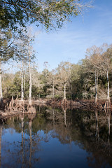 River reflection (Kindle Girl) Tags: reflections river florida cypresses withlacoochee