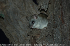 """Tree Mouse • <a style=""""font-size:0.8em;"""" href=""""http://www.flickr.com/photos/56545707@N05/8364534529/"""" target=""""_blank"""">View on Flickr</a>"""