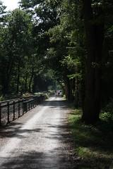 The road to summer (dididumm) Tags: road summer sunshine path sommer strasse bicycles dust weg fahrrder pfad sonnenschein staub