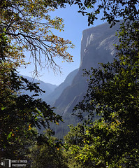View to El Capitan (James L. Snyder) Tags: california park autumn trees wild usa mountain fall leaves rock vertical wall forest point nationalpark quercus woods october afternoon view natural branches sunny bluesky brush cliffs sierra foliage formation clear pines valley yosemite granite vista late opening verdant yosemitenationalpark mountainside rough wilderness cloudless soaring canopy oaks elcapitan sierranevada overlook majestic monolith bushes vignette shrubs sylvan magnificent rugged steep 2012 yosemitevalley sheer tangled lofty monumental artistpoint thicket promontory beckoning grandeur coarse overhanging mariposacounty fourmiletrail distantmountains yosemitewilderness