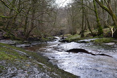 Gelt Woods (Andi1275) Tags: cumbria geltwoods uploaded:by=flickrmobile flickriosapp:filter=nofilter