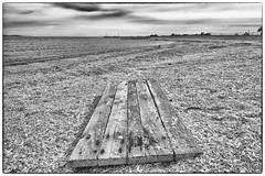 Board - Salton Sea Beach, CA (gastwa) Tags: california sea bw white black nature landscape nikon focus scenery angle wide shift wideangle andrew palm full pollution springs frame 24mm manual fullframe fx tilt sensor d800 salton f35 tiltshift pce gastwirth d800e andrewgastwirth