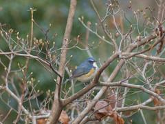 (Polotaro) Tags: bird nature pen olympus f45 300mm  zuiko  ep1       fzuiko300mmf45 fzuiko