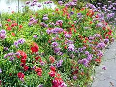 Auckland Botanical Gardens, Manurewa, South Auckland, New Zealand (Sandy Austin) Tags: flowers newzealand border northisland manurewa aucklandbotanicalgardens southauckland sandyaustin panasoniclumixdmcfz40