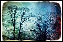 Noche mgica (Colore-arte) Tags: moon tree texture textura canon arbol noche ps luna edition nigth misterio edicion procesado blinkagain