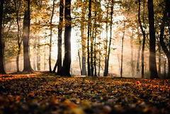 need (ewitsoe) Tags: morning autumn trees sun fall leaves forest 35mm season woods nikon focus poland sunny falling change autumnal poznan lowpov d80 bathedinlight parksolacki