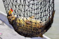 9660 (Marbeck53) Tags: trip travel vacation fish canada net water animal canon eos boat lure eaglelake smallmouthbass hulapopper 60d micropterusdolomieu ontari0 marbeck53 markriesenbeck