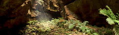 Grand Canyon Light (edwinemmerick) Tags: longexposure panorama cliff 20d nature rock photoshop canon landscape eos moss blackheath stitch grandcanyon australia bluemountains le nsw slowshutter edwin slotcanyon ferm cs3 darkplaces emmerick edwinemmerick