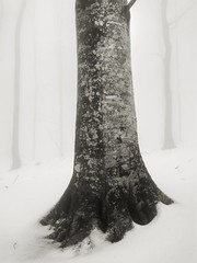 Wood in winter (SCTfinearts) Tags: trees winter blackandwhite snow cold nature monochrome woods loneliness wind snowstorm monochromatic freeze