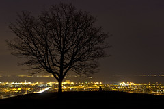 The Tree with the view (Grant_R) Tags: tree night scotland edinburgh cityscape leith viewpoint caltonhill grantr