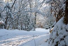 proga_01 (gregork.) Tags: blue houses winter sky panorama house snow mountains tree forest landscape hill slovenia slovenija zima could gora februar selo sneg vodice landsscape hrib panoramio gozd drevo 2013 hladno hiša rašica