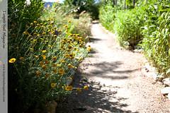 Organic chef garden - La Bonne Etape (Scrumptious Venus) Tags: france provence hauteprovence labonneetape lespritsudmagazine chteauarnoux janygleize wwwlespritsudmagazinecom