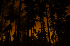 Sternwald (max rocker) Tags: city winter light tree night contrast forest dark golden long exposure glowing