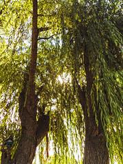Delta - Tigre (- MAGA -) Tags: plants sun green nature argentina tigre