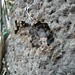 Termites taste like mint