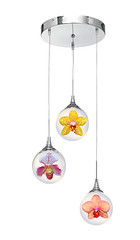 Orchid Chandelier (shaire productions) Tags: lighting flowers light orchid flower nature floral composite island idea image artistic furniture room picture inspired objects pic chandelier hawaiian concept aloha imagery hawai