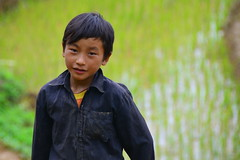 Working the rice fields - North Vietnam ((c) Orion Photography) Tags: travel photo nikon rice vietnam d7000