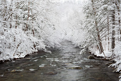 The Little River (John Cothron) Tags: winter snow cold tree nature water creek 35mm canon river landscape stream cloudy outdoor tennessee scenic overcast filter flowing ze cpl freshwater afternoonlight littleriver seviercounty greatsmokymountainnationalpark metcalfbottoms wearsvalley volunteerstate johncothron 5dmkii cothronphotography weargaproad zeissmakroplanart250mmze johncothron img10198130302