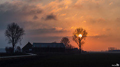Good morning sunshine (BraCom (Bram)) Tags: road sun house holland tree silhouette clouds sunrise canon path farm widescreen cottage pad nederland thenetherlands wolken boom explore 169 zon huisje silhouet weg boerderij zuidholland goereeoverflakkee southholland zonsopkomst canonef24105mmf4lisusm dirksland bracom mygearandme mygearandmepremium mygearandmebronze mygearandmesilver mygearandmegold mygearandmeplatinum mygearandmediamond canoneos5dmkiii oudelandsedijk
