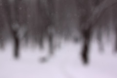 Beyond Our Finite Comprehension (jnm_ua) Tags: trees winter snow graphics dof time bokeh snowy infinity space vision pathway disappear fadingaway beyondourfinitecomprehension vanishfromsight